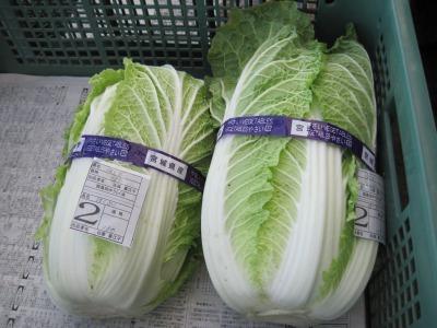 新鮮白菜.jpg
