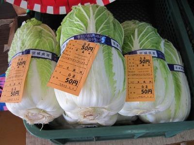 白菜50円 ②.jpg